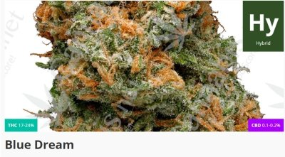 Blue Dream is a sativa-dominant hybrid from California and is used in the treatment of Autism.