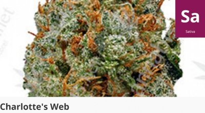 Charlotte's Web is a legendary medicinal strain for numerous debilitating disorders, particularly epilepsy, anxiety, and autism.