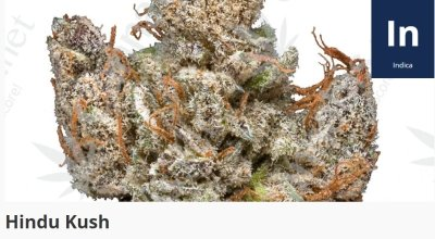 Hindu Kush is a pure indica hailing from the mountain ranges after which it's named after.